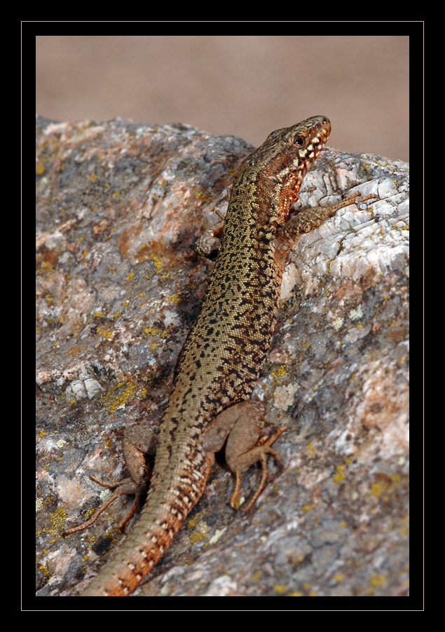 lezard-photo-nicolas-dupieux