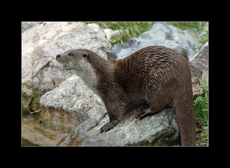 loutre-photo-nicolas-dupieux