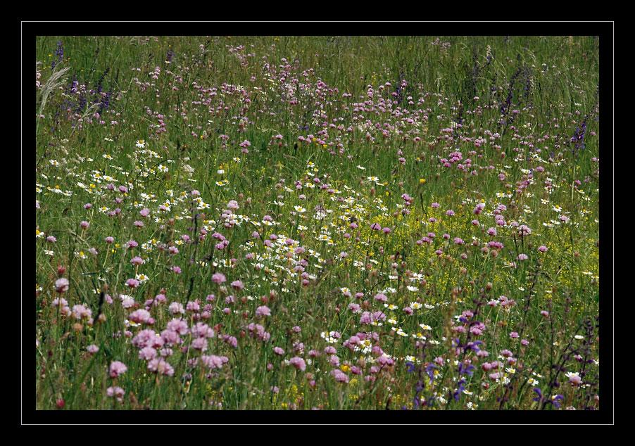 prairie-photo-nicolas-dupieux